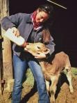 Feeding calf