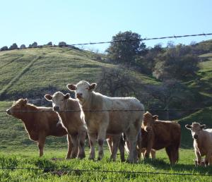 Where's the beef...without ranchers?