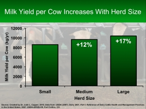 Yield per cow and herd size (metric)