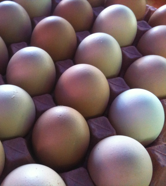 eggs-cropped